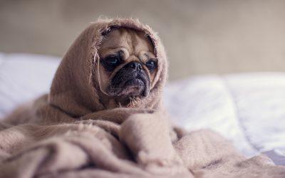 how-sleep-affects-performance-fitplan